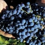 croatia tours grapes
