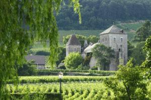 View of vineyards in Gevrey Chambertin, France